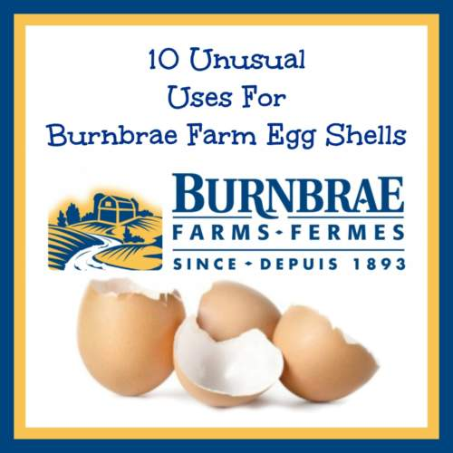 10 Uses for Burnbrae Egg Shells